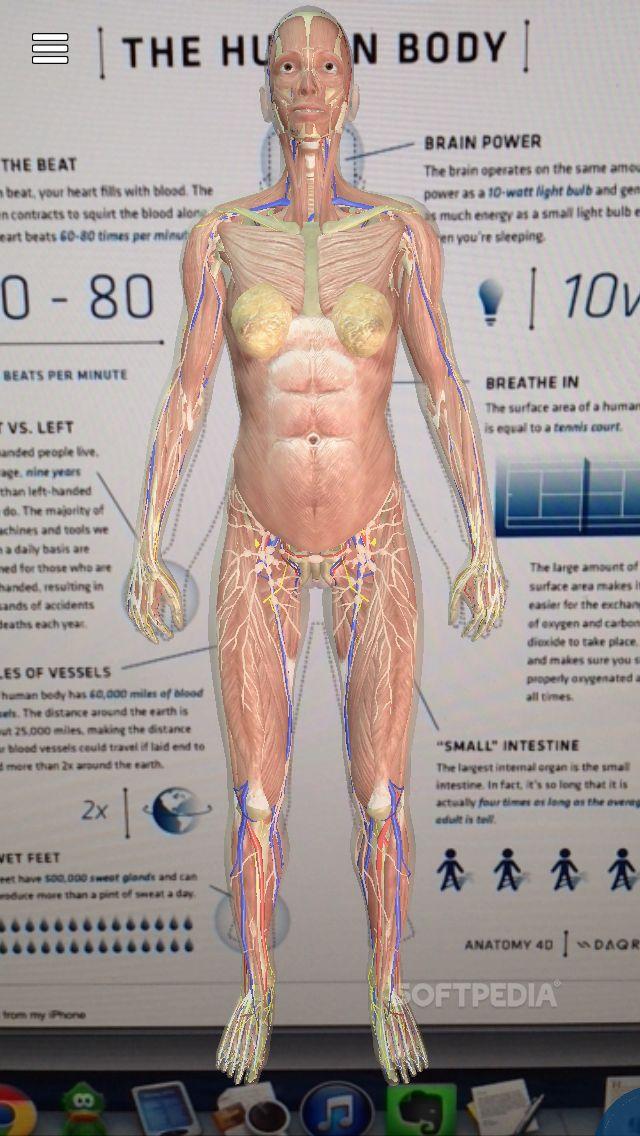 Ungewöhnlich 4d Human Anatomy Ideen - Menschliche Anatomie Bilder ...